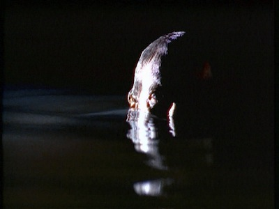 1X23_underwater